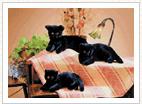 黒猫のリリア